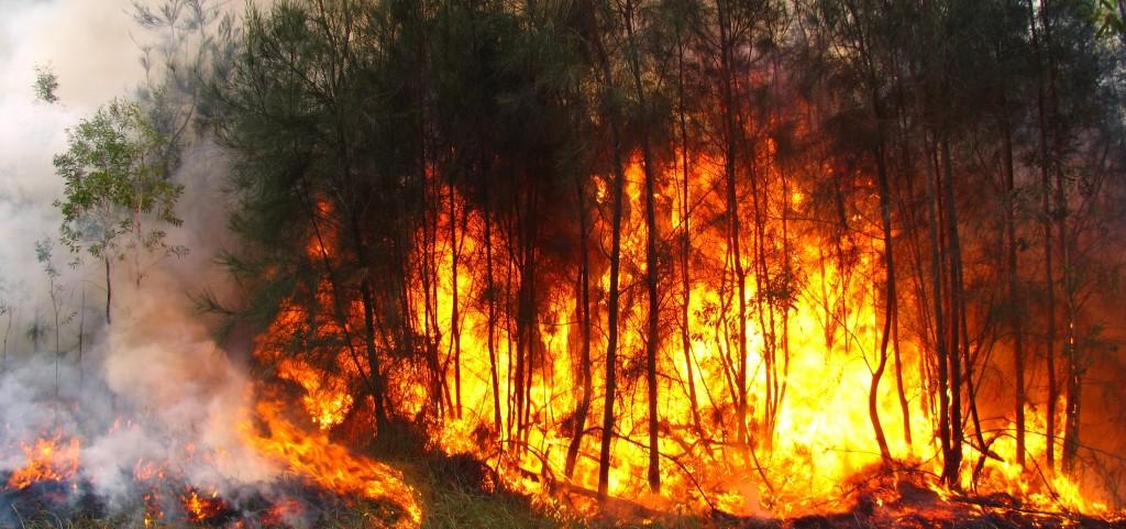 Planes Locales Prevención Incendios Forestales